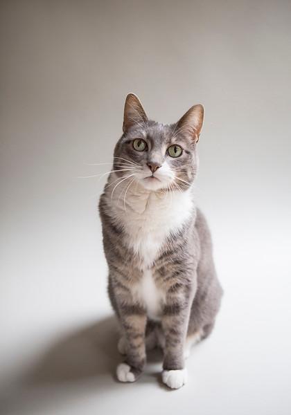 sitting cat portrait