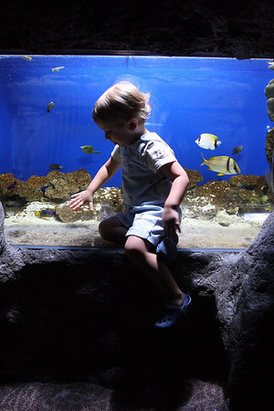 Florida Aquarium August 2009