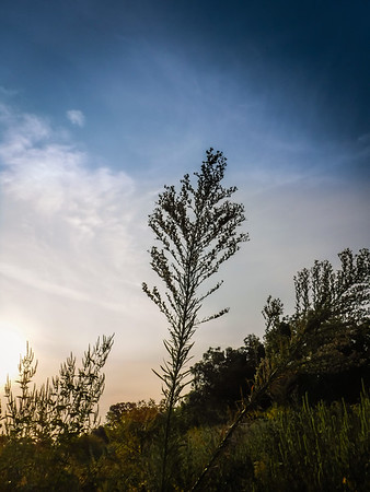 Southlake - BJNC - North Walnut Grove Trail  - 9/13/2017