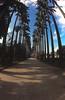 Jardim Botanico 1 vertical_-alta