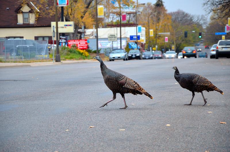 Turkey's In MPLS_048.JPG