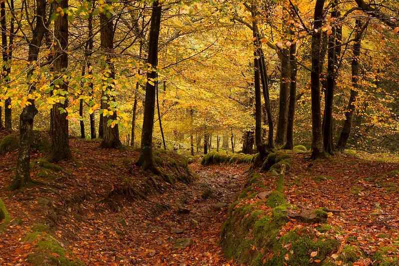 Elterwater wood 4.jpg