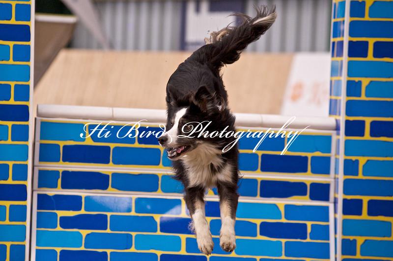 medium dog agility 1160.jpg