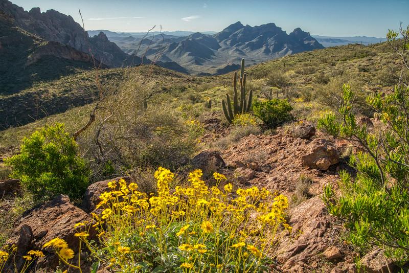 Organ Pipe Cactus 2020-22.jpg