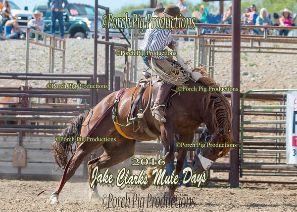 Bronc  Riding 2016 Jake Clarks  Mule Days   Rodeo