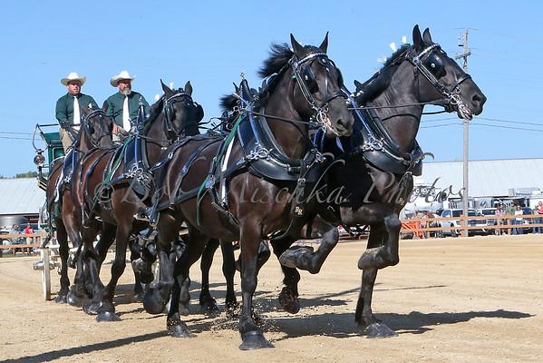 09/05/21 Elkhorn Fair Hitches