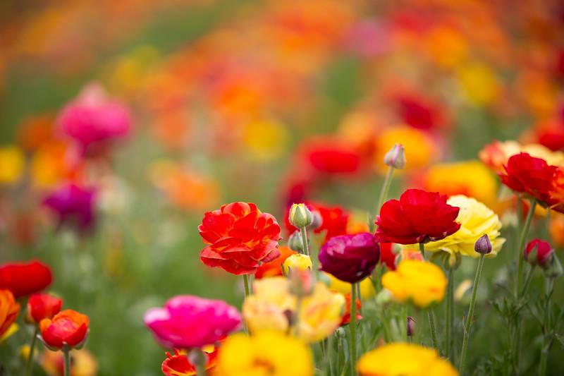 Spring Flowers B-285.jpg