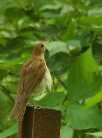 Shenandoah National Park - Bird Favorites