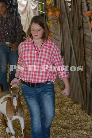 2014 Trinity Fair Animal Show