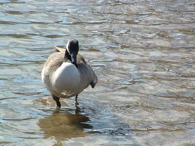 Lake Needwood 3-13-2005