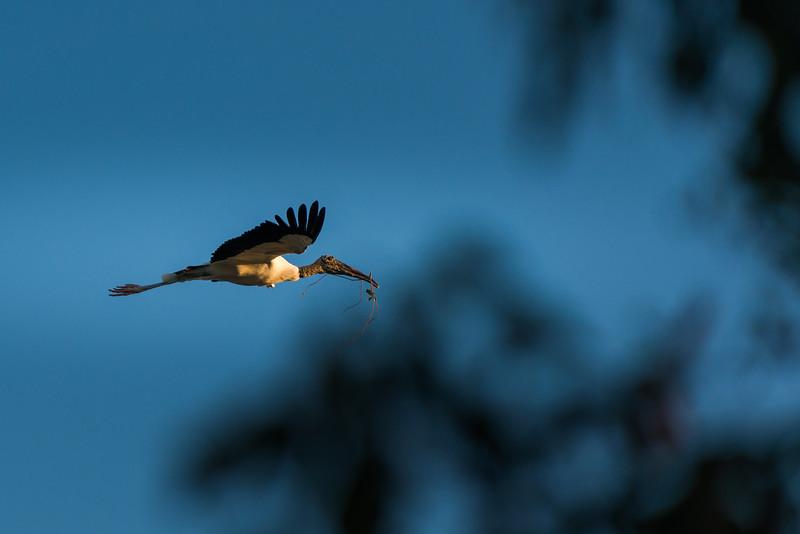 Everglades (17 of 37).jpg
