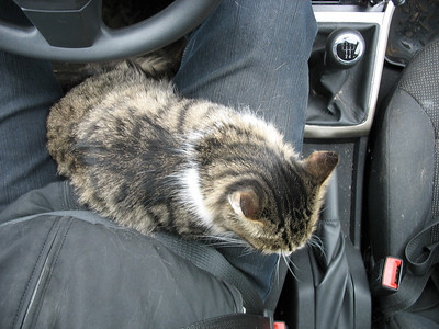2009-04-03, Muska the cat in the car