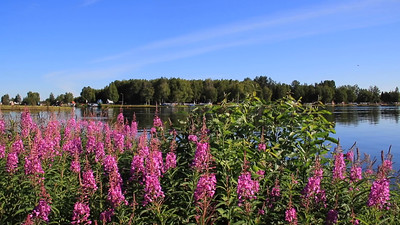 FIREWEED & PLANES