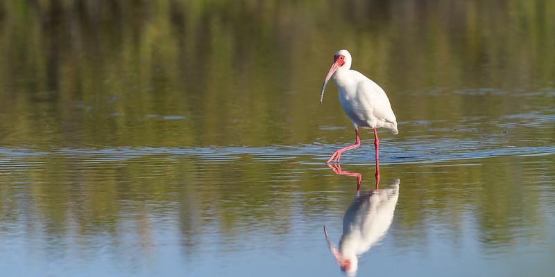 2021_KSMetz_Florida_Osprey Trip_NIKON D5_1741-Edit.jpg
