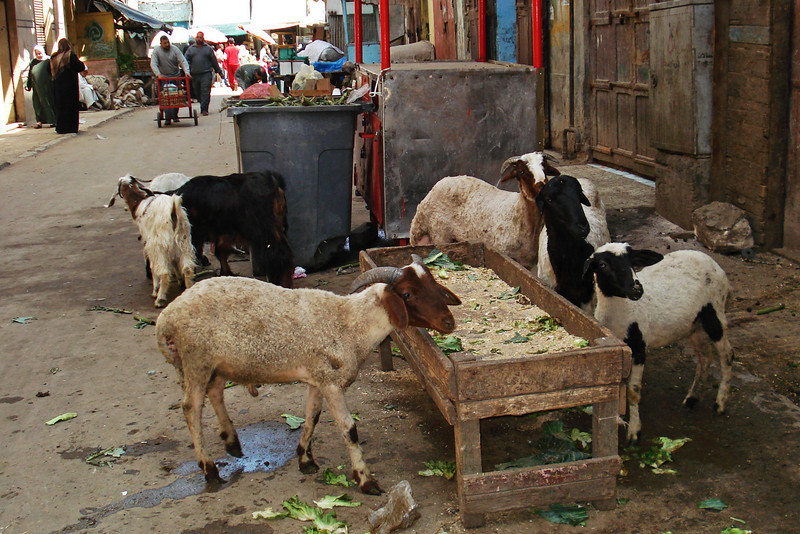 Goats at the Souk 1.jpg