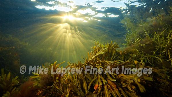 Sunset Underwater