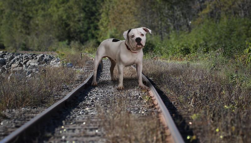 dog-track.jpg