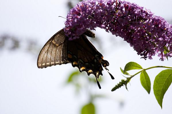 National Zoo Butterflies