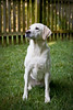 Ranson photography, a Richmond Virginia based professional photography business, specializes in pet portraits.  We offer flexible session packages that can meet your specific photography needs.  We will also travel to your home, to any desired location, and also offer pet portrait sessions in our Richmond photography studio.