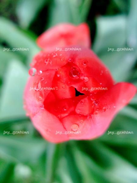 20100407_Flowers06.JPG