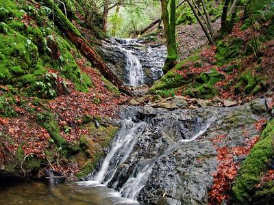 2009-01-29 Uvas County Park, west of Morgan Hill