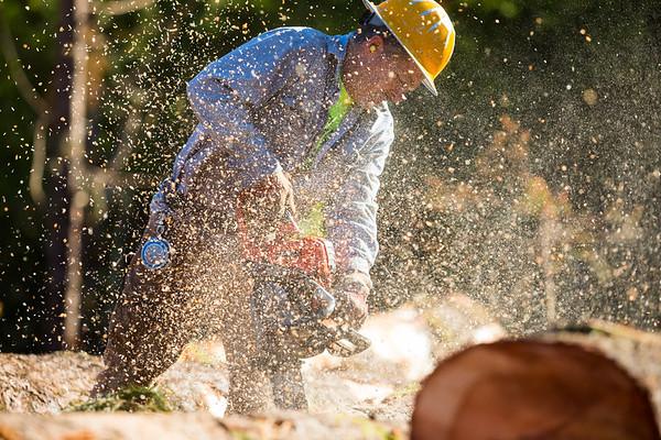 Houser Logging