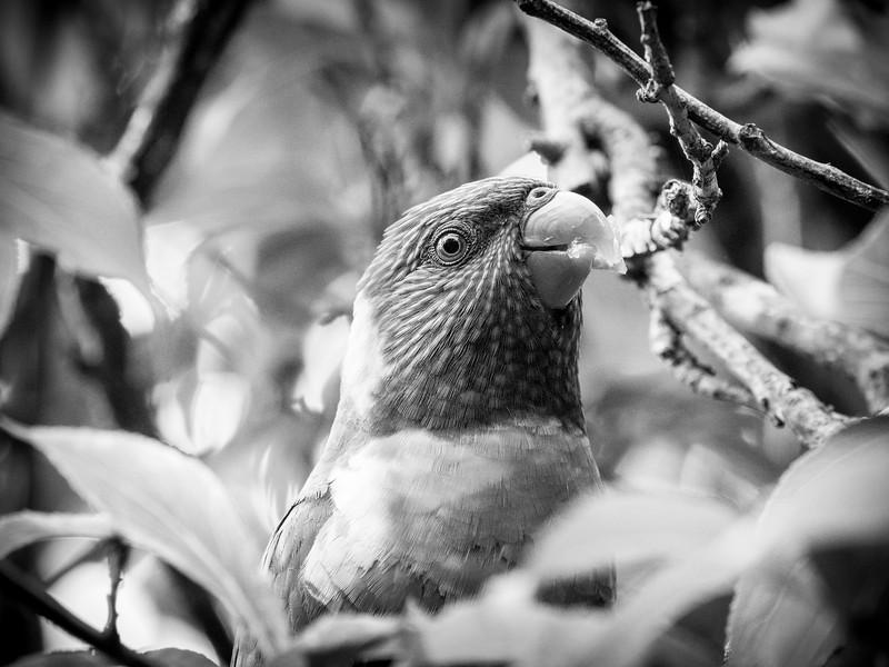 121818  birds  _26.JPG