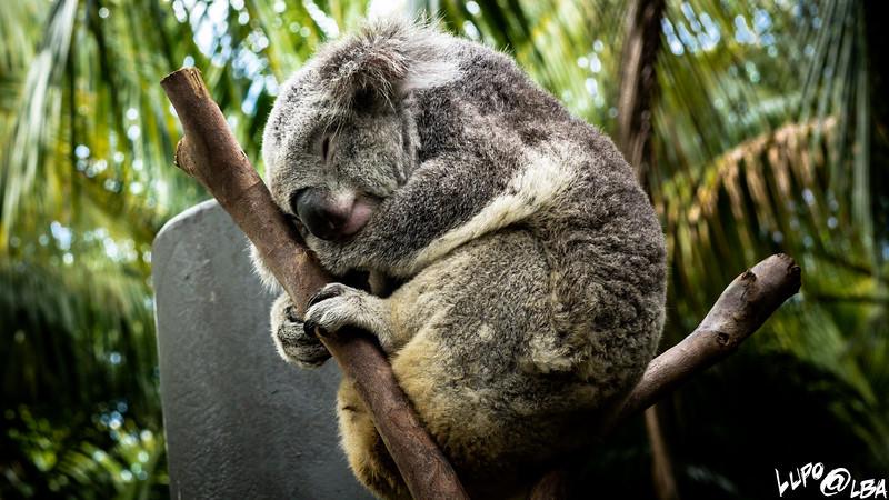 Australia-1028.jpg