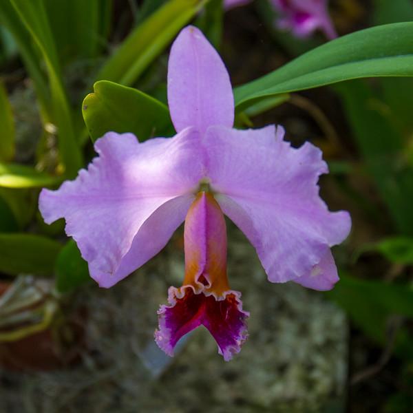 naples_botanical_garden_0046-LR.jpg