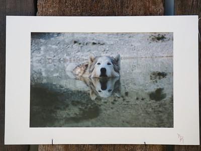 Wasser husky