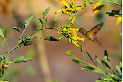 Birds of Oaxaca, Mexico