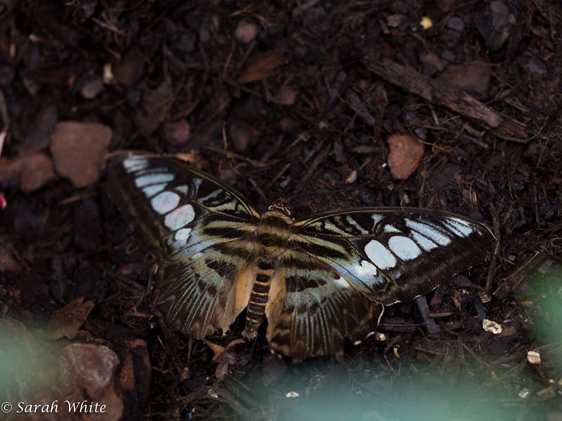 140503_ButterflyHouse_462.jpg