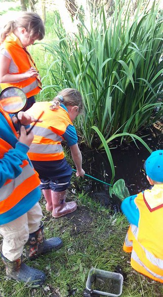 Beavers - Pond Dipping