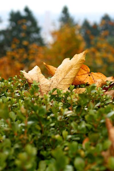 Portland Japanese Garden  11-11-11  3543.jpg