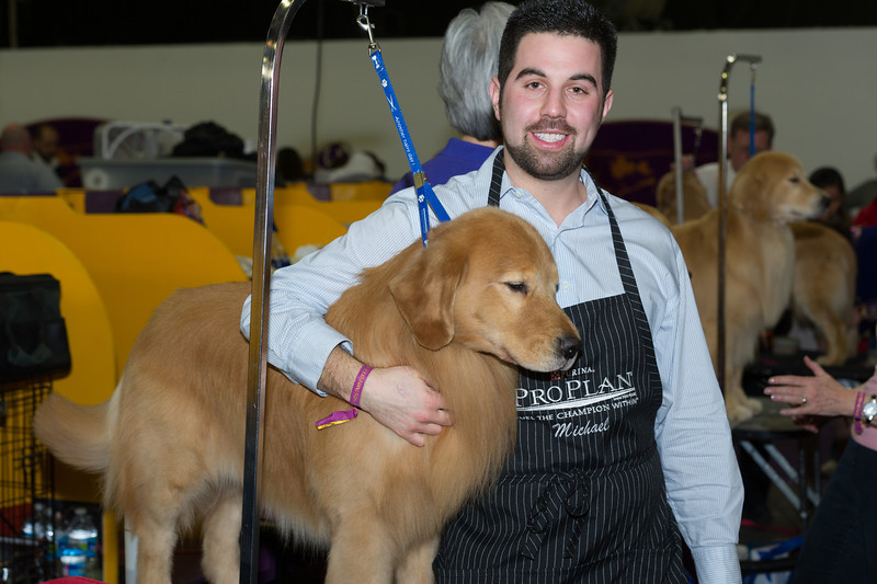 2014 - Best of Breed Golden Retrievers