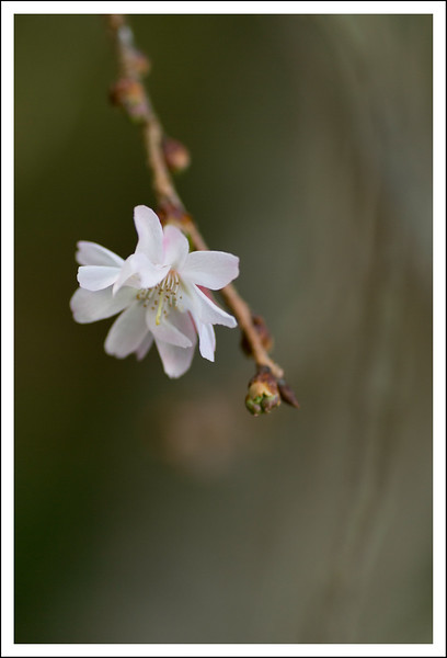 October Cherries-0785.jpg