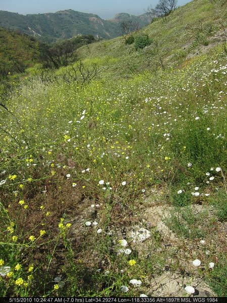 20100515022-Doc Larson Trail Recon.JPG