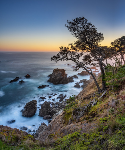 Halprin Pine Twilight 1 sm.jpg