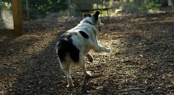 PICS JUNE 13::MARLEY (boy pup)