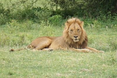1494239978African-Safari-67.jpg