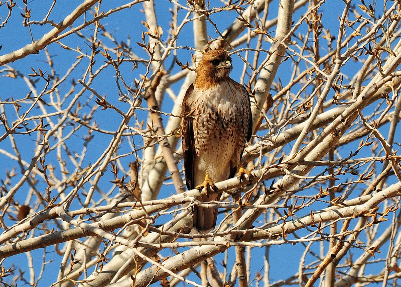 NEA_1149-7x5-Hawk.jpg