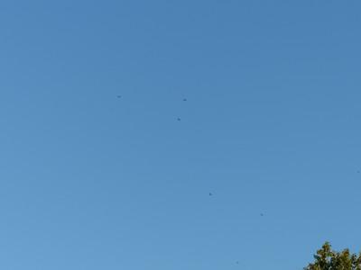 20160818 Common Nighthawk