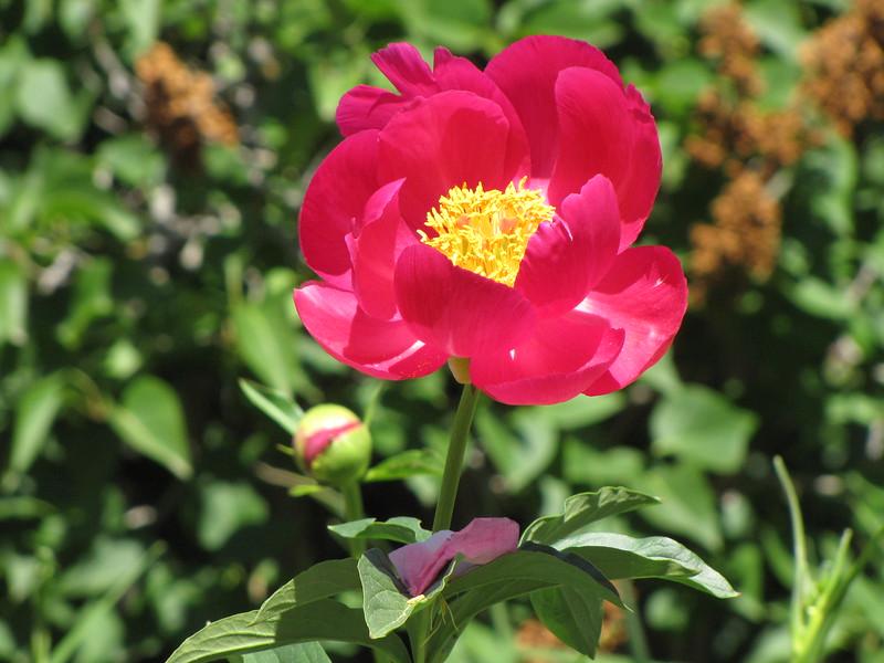 amh FLOWERS (1052).jpg