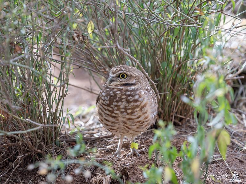 Arizona-Sonora Desert Museum-206.jpg