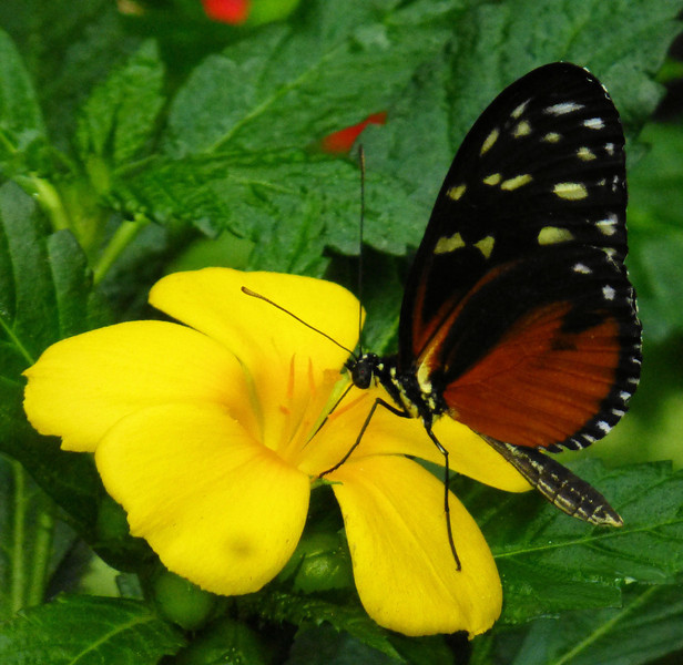 DAy7-Mainau butterfly.jpg