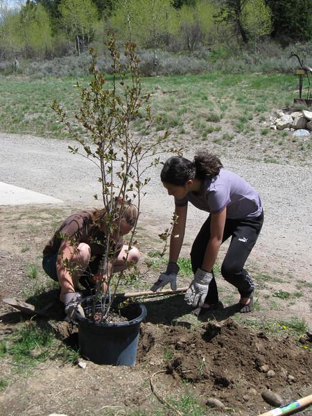 06_03_2011_Tree Planting