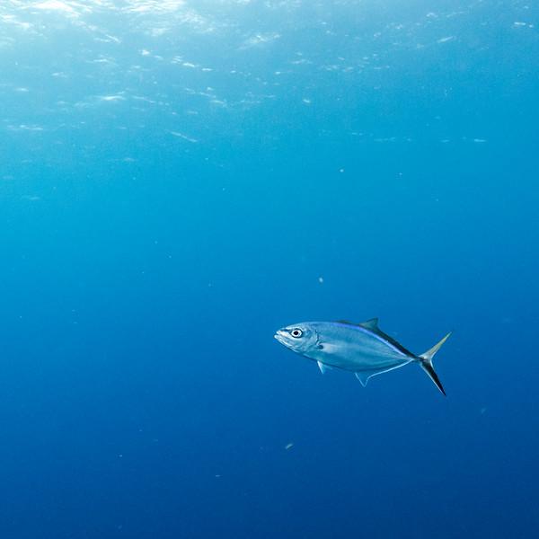 Fish underwater, Belize