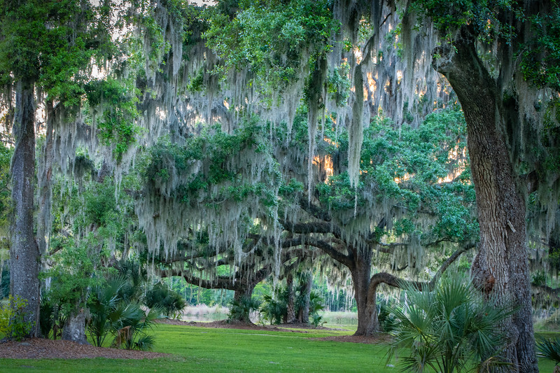 Sunset with Live Oaks and Spanish Moss