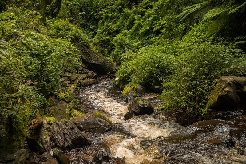 Nyugwe-Rwanda-31.jpg