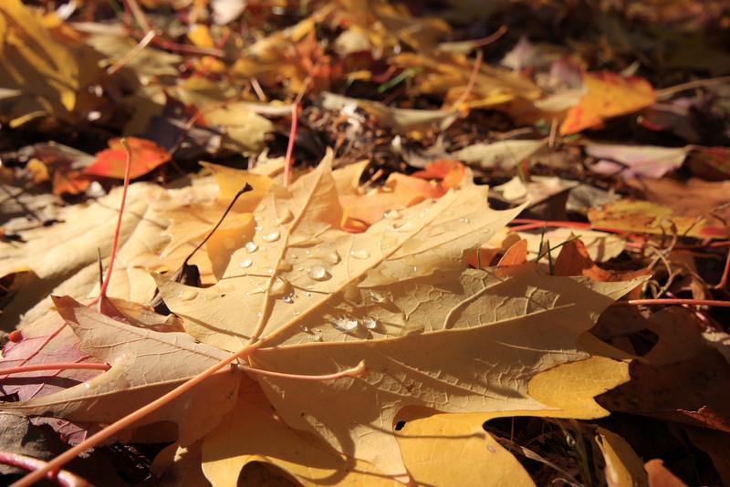 Fall 2007 065.JPG